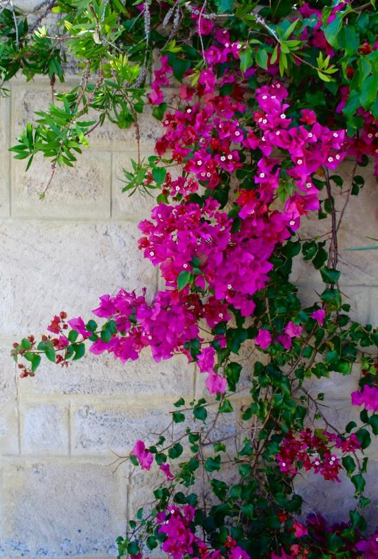 Slight Charm Oz Flower 1