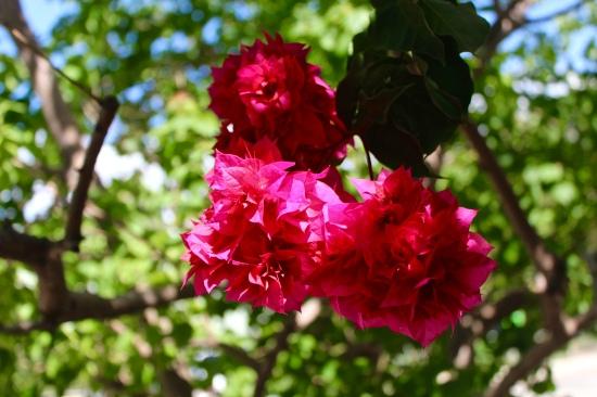 Slight Charm Oz Flower 3