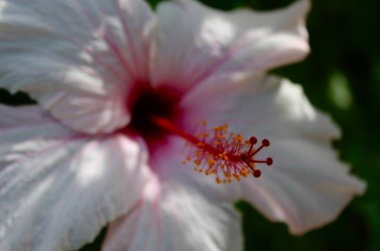 Slight Charm Oz Flower 6
