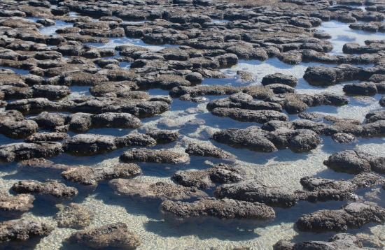 Slight Charm Stromatolites