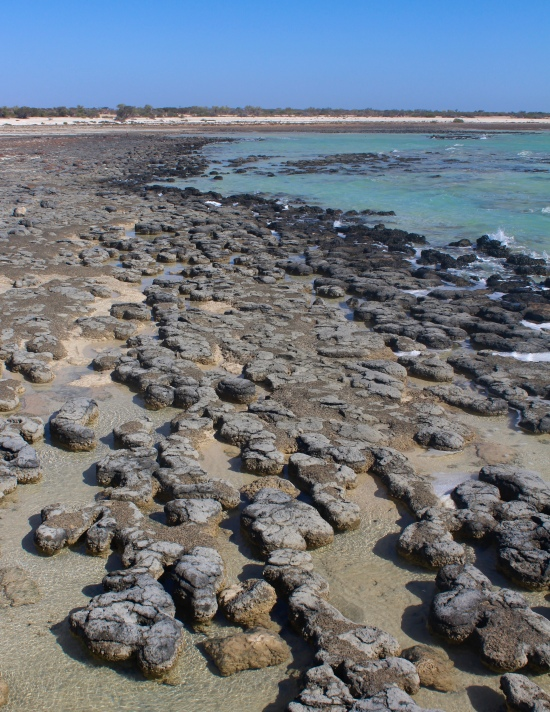 Slight Charm Stromatolite Beach