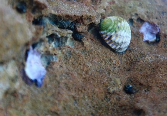 Slight Charm Rock n Snail