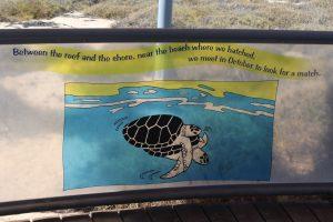 Slight Charm Exmouth Awe 2 Turtles