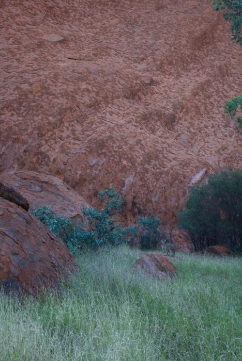 Slight Charm Uluru Joey